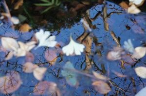 池に映る木