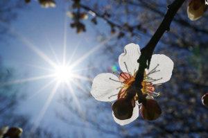 仙波河岸史跡公園の梅