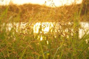 伊佐沼の夕日