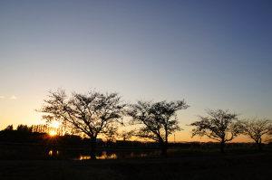 伊佐沼の日没