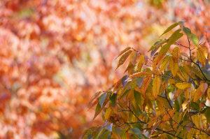 川越水上公園の紅葉